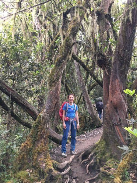 rainforest mount kilimanjaro